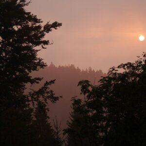 Der Bohnet geht um <br/>Morgenerwachen am Teisenkopf mit Schwarzwald-Guide Joachim Waidele<br/> Freitag, 30.07.21